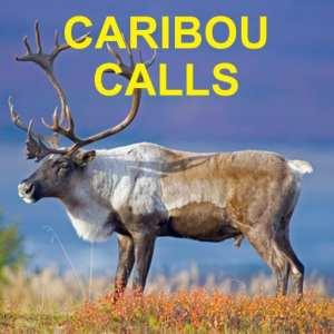 Caribou Calls - Caribou Hunting Calls App - Caribou eCaller