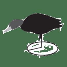 Duck Hunting Gear: Feeding Field Duck Decoy