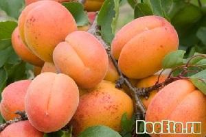 dieta-na-abrikosah