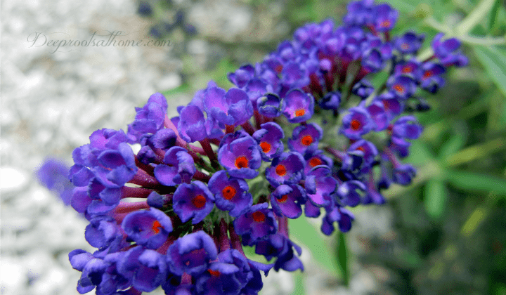Top Fragrant Flowers And Shrubs For Your Garden