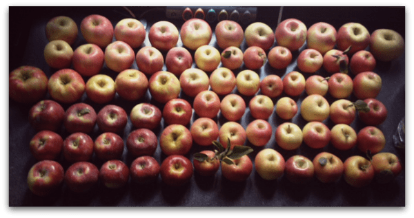 pick your own apples Delaware