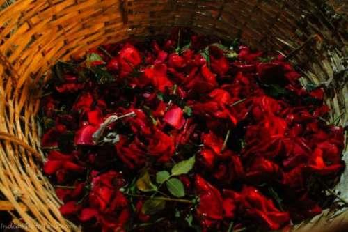 New delhi flower market photo walk