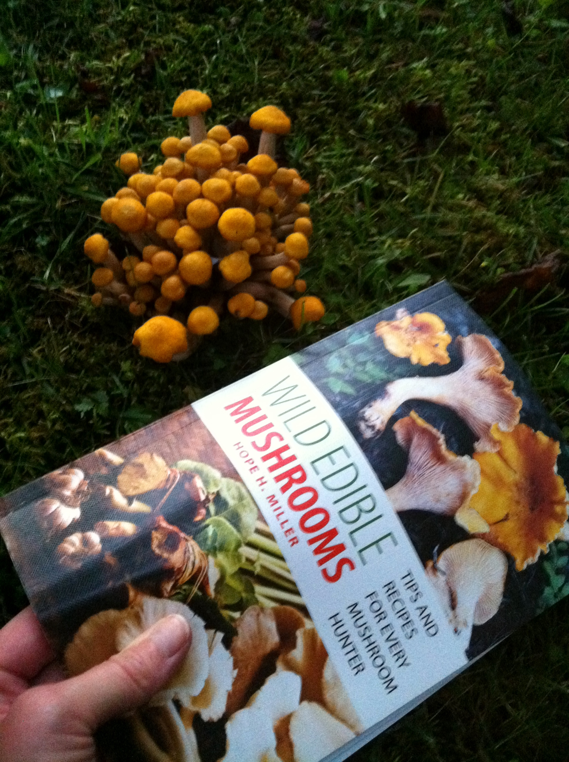 strange and beautiful mushrooms from my backyard u2013 delicious potager