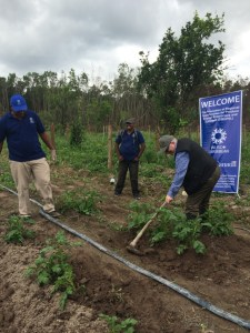 Canada's High Commissioner to Guyana, Pierre Giroux assisting on the farm