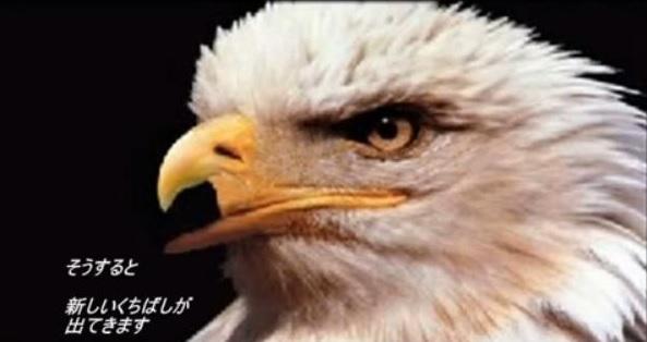動画「鷹の選択」のシーン