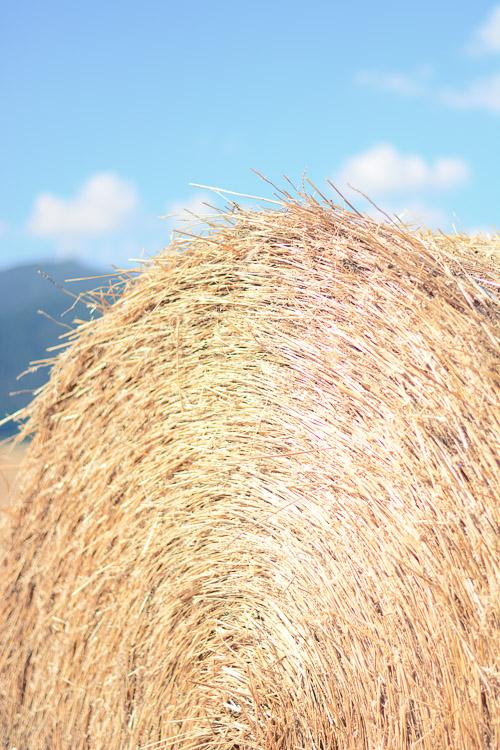 Fields Of Gold Hays