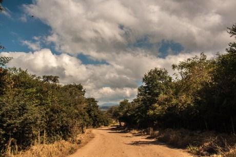 farm-tracks-through-woodland-with-clouds