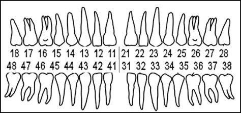 Alternate tooth numbering system
