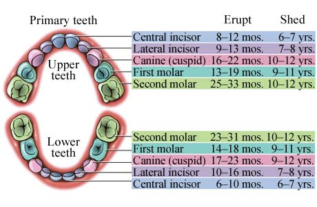 Dentalogy Dental Care - Gigi Anak 14