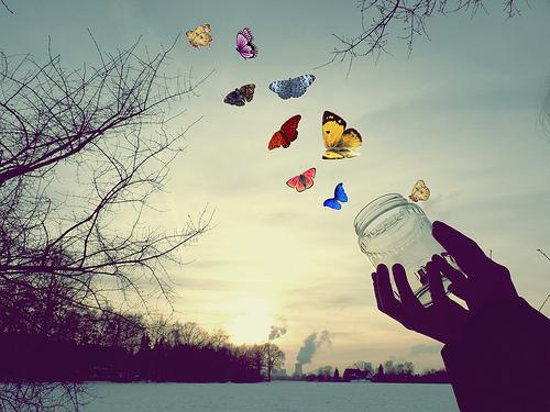 Siga a borboleta !