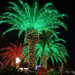 Auch Palmen erfreuen.