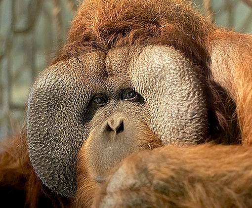 Bushi-Zoo-OS