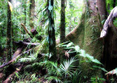australianrainforest