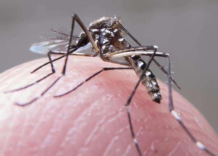 Casos de zika são confirmados na Itália, Espanha, Inglaterra e Portugal