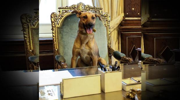 Argentina e o cachorro na presidência