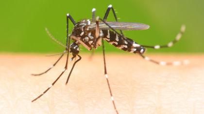 México registra 201 casos de Zika, 48 em grávidas