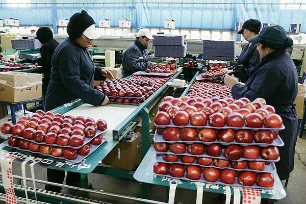 Sobre maçãs, interesses do Brasil e projeto nacional de desenvolvimento