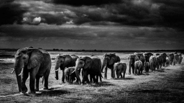 Crimes contra vida selvagem são problema global, alerta ONU