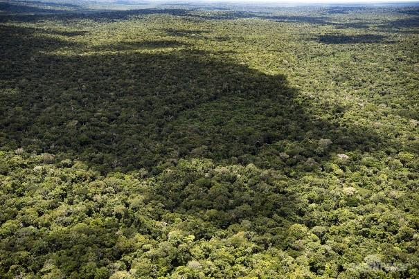 Sinal verde para a destruição da Amazônia