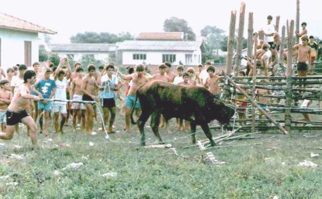 STJ nega habeas corpus a bois resgatados em farra do boi em Santa Catarina