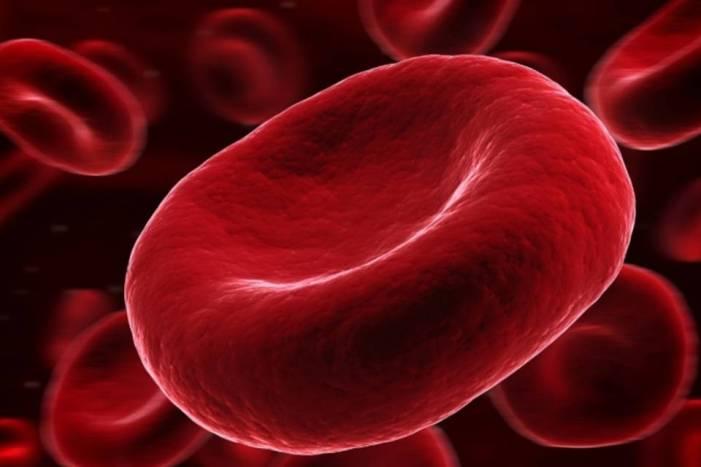 Células com HIV são combatidas por proteína presente na flora brasileira