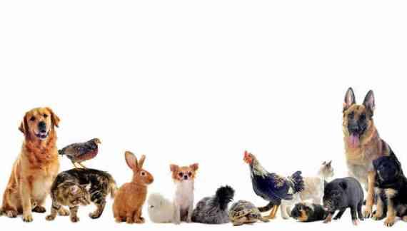 Aprovada na Alesc lei que cria delegacia virtual de proteção animal em SC