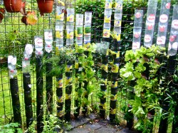 Classy Bottle Masses Offood On A Few Square Bottle Towers Desertification Youtube Container Gardening Vegetables Youtube Container Gardening Soil Combating Malnutrition Vertical Gardening