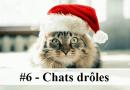 #6 – 10 photos de chats drôles