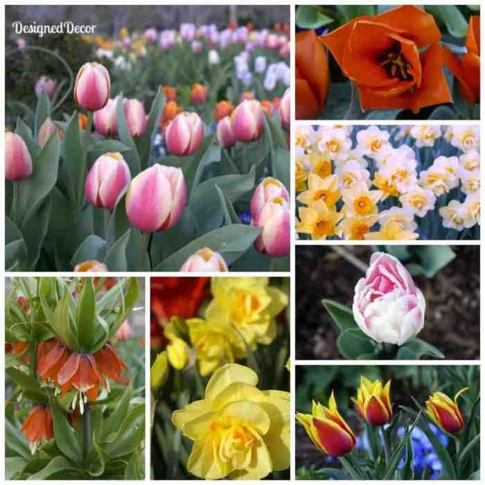 Tulip Festival 2013 Flowers 1