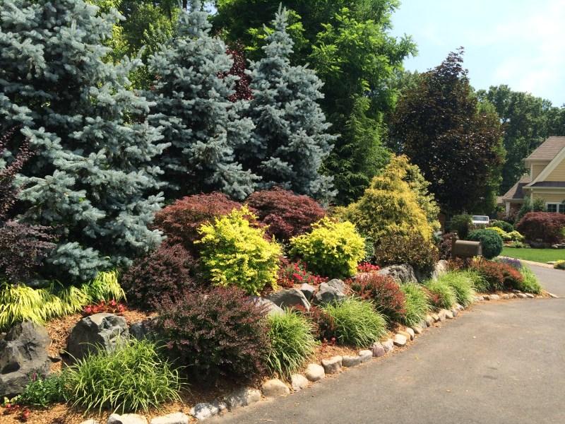 Large Of Evergreen Landscape And Design