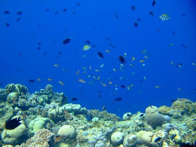 Coral wall in Bunaken