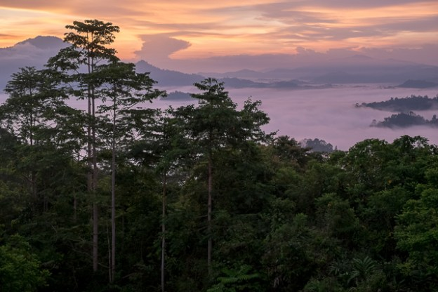Danum Valley sunrise