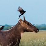 Tal Chapar-Rajasthan for Bird Watching