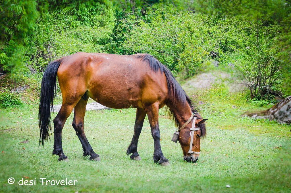 Horse meadow Himalayas kumaon