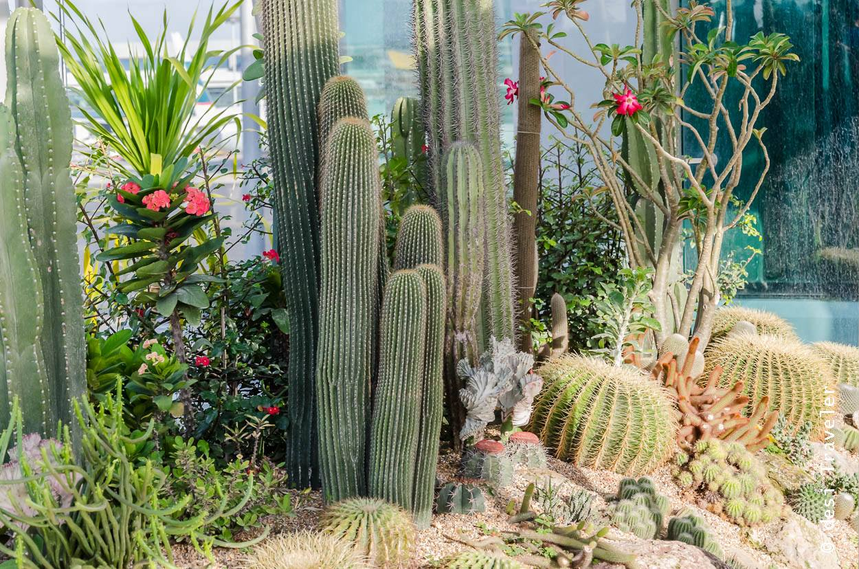 High Quality Free Things To Do Changi Airport   Cactus Garden