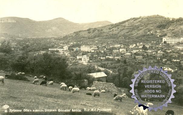 изглед, овце