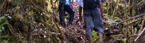 Subiendo por la selva