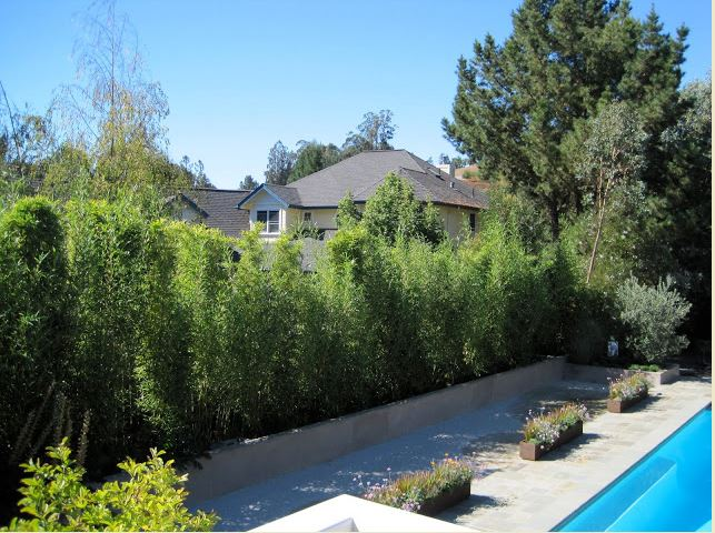 Pool with 12' Black Bamboo