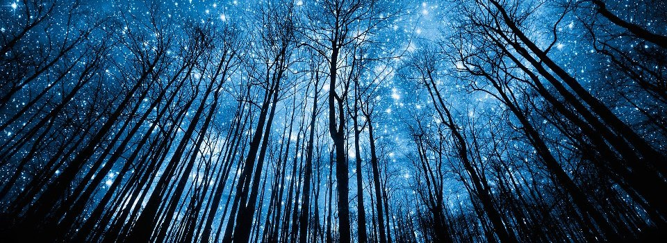Winter-Forest-At-Night-4