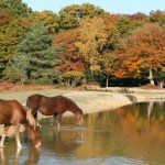Descubre New Forest National Park