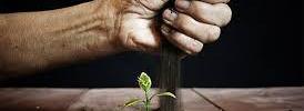 Startups bangladesh SEO