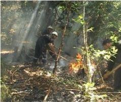 fire_vashlovani_national_park