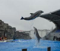 batumi_dolphinarium