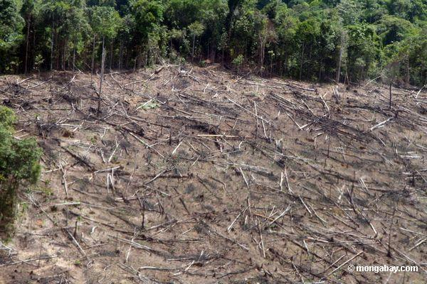 Study finds agriculture and deforestation accelerate soil erosion 100 times faster
