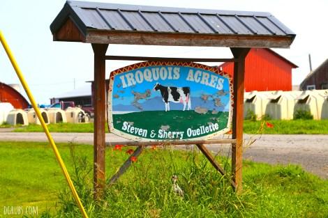Vermont Farm Tour 7