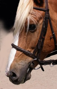 Don't be like a horse that needs a harness to obey.