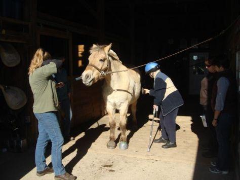 grooming zack 1 A Love of Horses Brings Back Good Memories