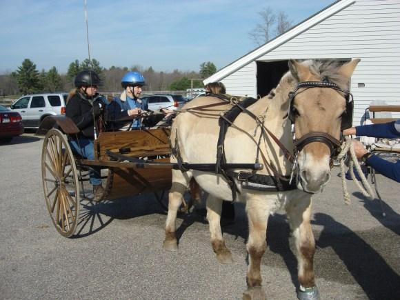 A Love of Horses Brings Back Good Memories