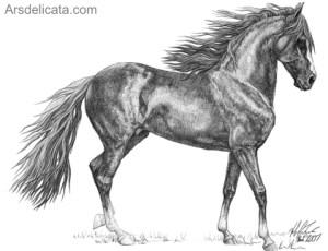 como dibujar a lapiz un caballo (9)