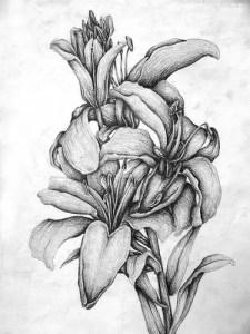 dibujos a lapiz artisticos (6)